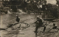 Three People Pulling Giant Fish out of Water