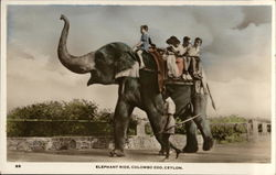 Elephant Ride at the Zoo