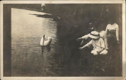 People Reaching out to White Swan in the Water