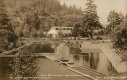 Fish Hatchery on Columbia River Highway