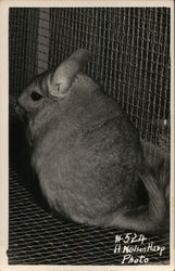 Closeup of Mouse in a Screened Cage
