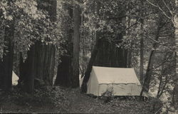 Berkeley Redwood Camp