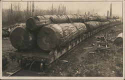 Logging in the West - A Train of Big Logs Ready for Transportation