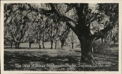 The Oaks at Burke Sanitarium