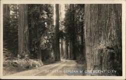 Redwood Trees and Road between Eureka and Crescent City