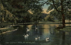 Swans on the Water at Leeper Park