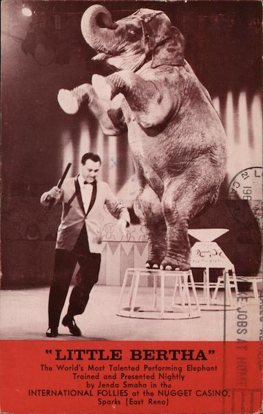 Little Bertha Performing Elephant Sparks Nevada Elephants