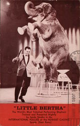 """Little Bertha"" Performing Elephant"