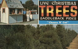 Saddleback Pines Christmas Trees