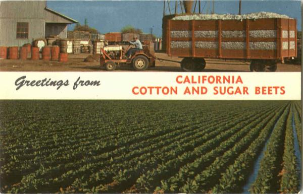 Greetings From California Cotton And Sugar Beets Scenic