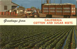 Greetings From California Cotton And Sugar Beets