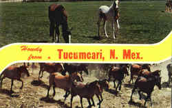 Howdy From Tucumcari Postcard