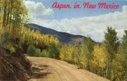 Aspen In New Mexico