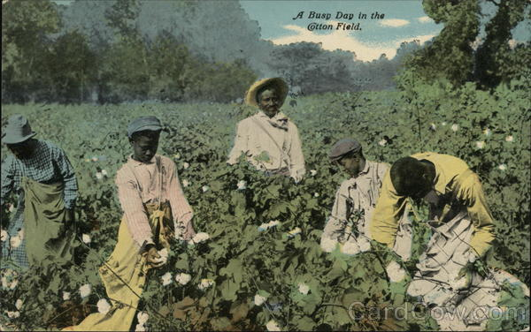 A Busy Day in the Cotton Field. Black Americana