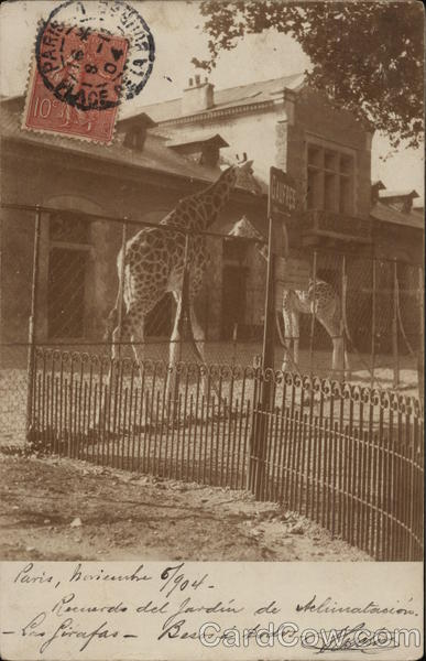 Giraffes at the Zoo Cancelled on Front (COF)