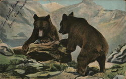 Two Brown Bears in Mountainous Region at Tree Stump