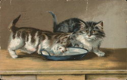 Two Kittens at Bowl of Milk, One is Drinking