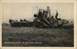Harvesting Wheat in Eastern Oregon
