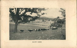 Dairy Herd - Blue Ridge Industrial School