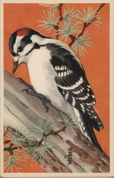 Downy Woodpecker Birds