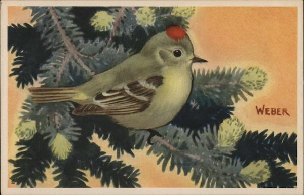Ruby Crowned Kinglet Birds