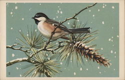 Chickadee on a Pine Branch