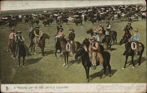 A Round Up in Cattle Country Cowboy Western