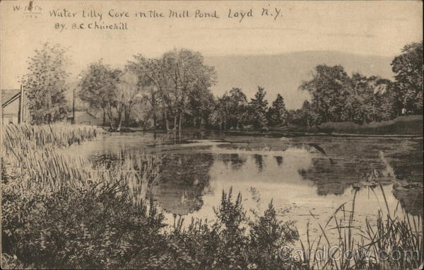 Water Lilly Cove in teh Mill Pond Lloyd New York