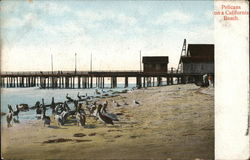 Pelicans on a California Beach