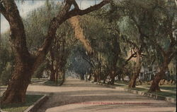 Avenue Lined with Pepper Trees