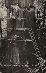Redwood Timber Felling