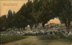 Sheep in the Shade of Poplars