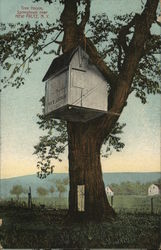 Tree House, Springtown