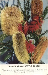 Banksias and Bottle Brush