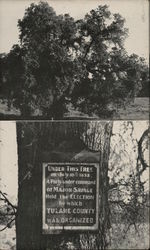Charter Oak - Under This Tree Tulare County Was Organized