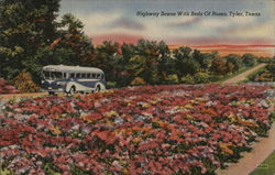 Highway Scene With Beds of Roses