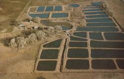 Hartley Fish Farm