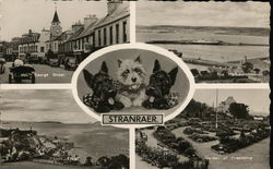 Greetings from Stranraer - Scottish Terriers