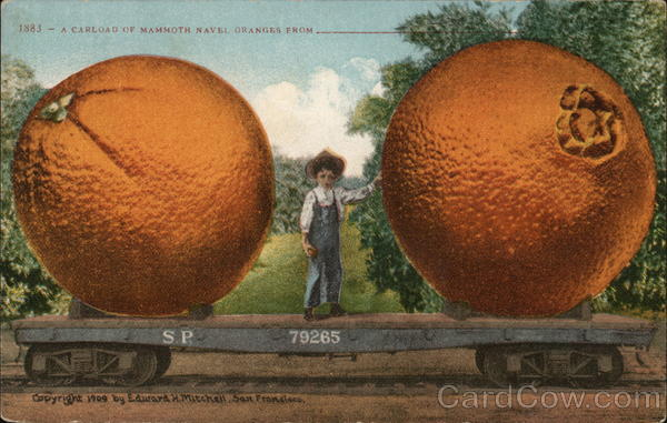 A Carload of Mammoth Navel Oranges From Exaggeration