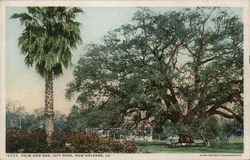 Palm and Oak, City Park