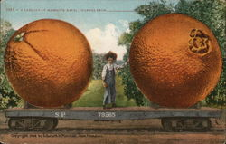 A Carload of Mammoth Navel Oranges From