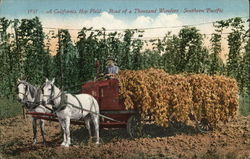 California Hop Field