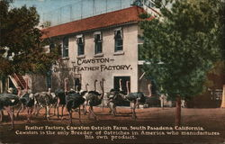 Cawston Ostrich Feather Factory