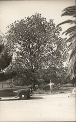 Man Standing Beneath Tree Near Car