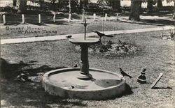 Birds in Large Birdbath - Sunset Motel