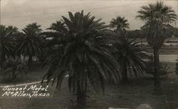 Palm Trees at Sunset Motel Postcard