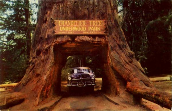 Chandelier Tree Underwood Park California - fallcreekonline.org