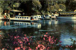 Florida's Beautiful Rainbow Springs Postcard