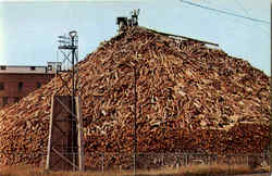 A Maine Woodpile