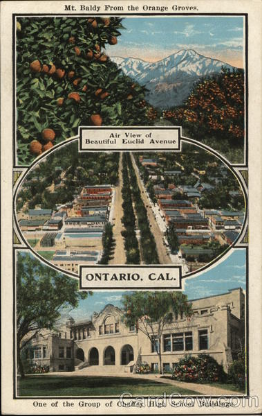 Mt Baldy From The Orange Groves Ontario Ca Postcard